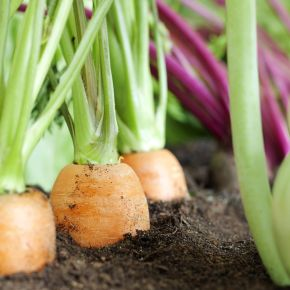 Tips for Planning Your First Vegetable Garden