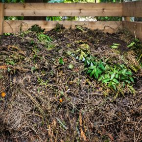 Mulching for Low-Maintenance Gardening