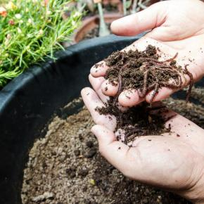 How to Create Rich Worm Composting? The Truth About Worm Types