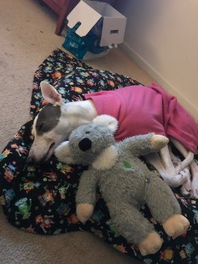 Winter… here is a sleeping greyhound!
