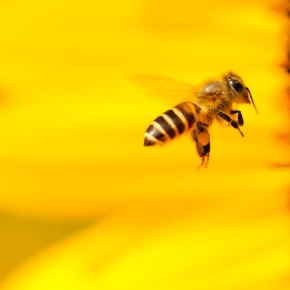 5 Simple Ways to Save the Bees