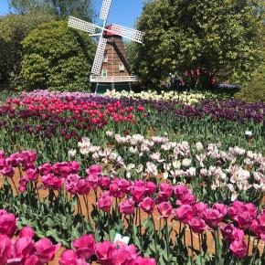Photos Like Tulips
