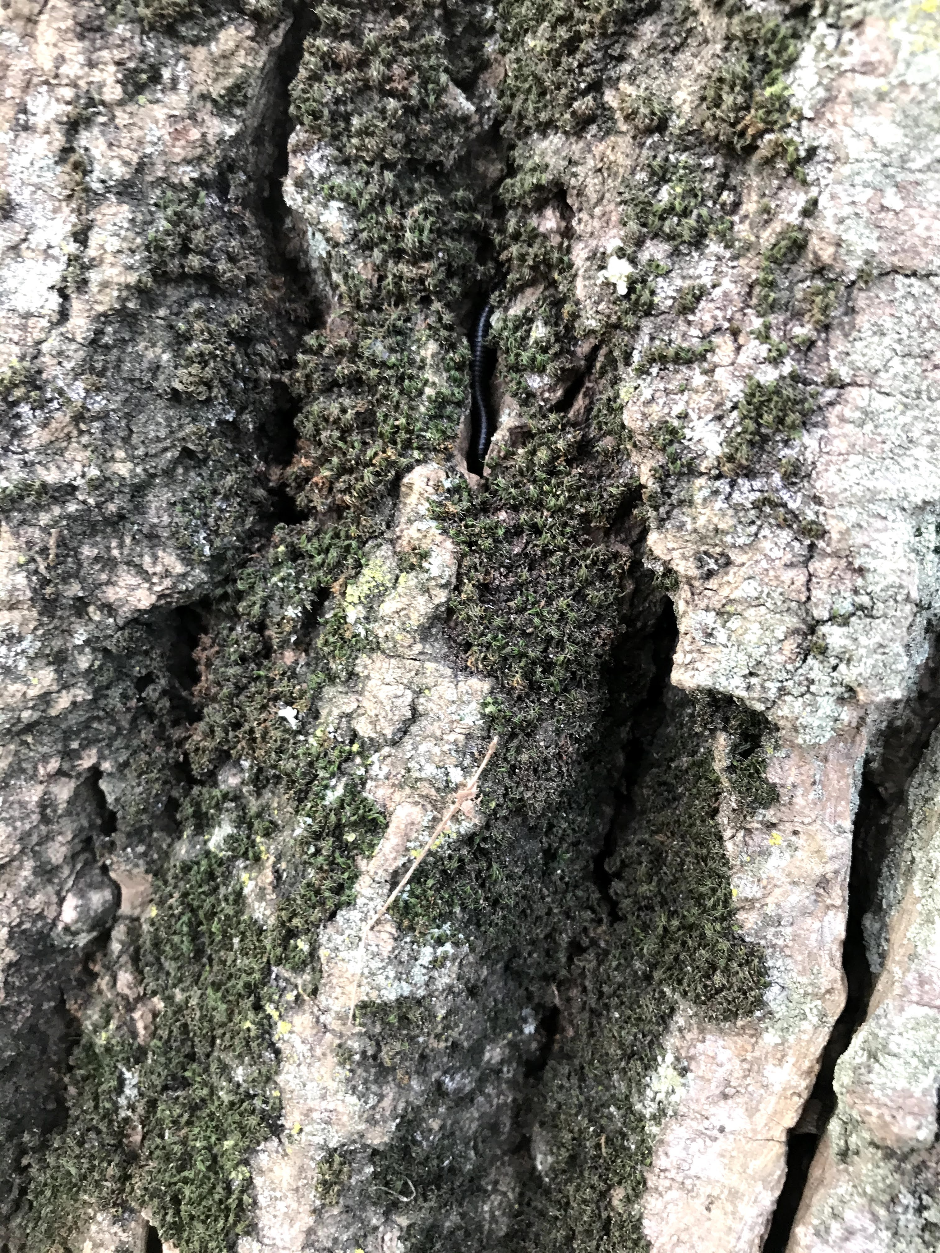 Close up of bark on large and old trees