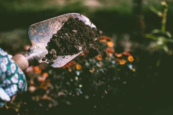 clean fresh earth from soil